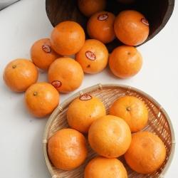 Jeruk Murcott Mandarin AUS 1 kg